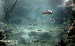 Fischwelt der Alpen von uns installiert